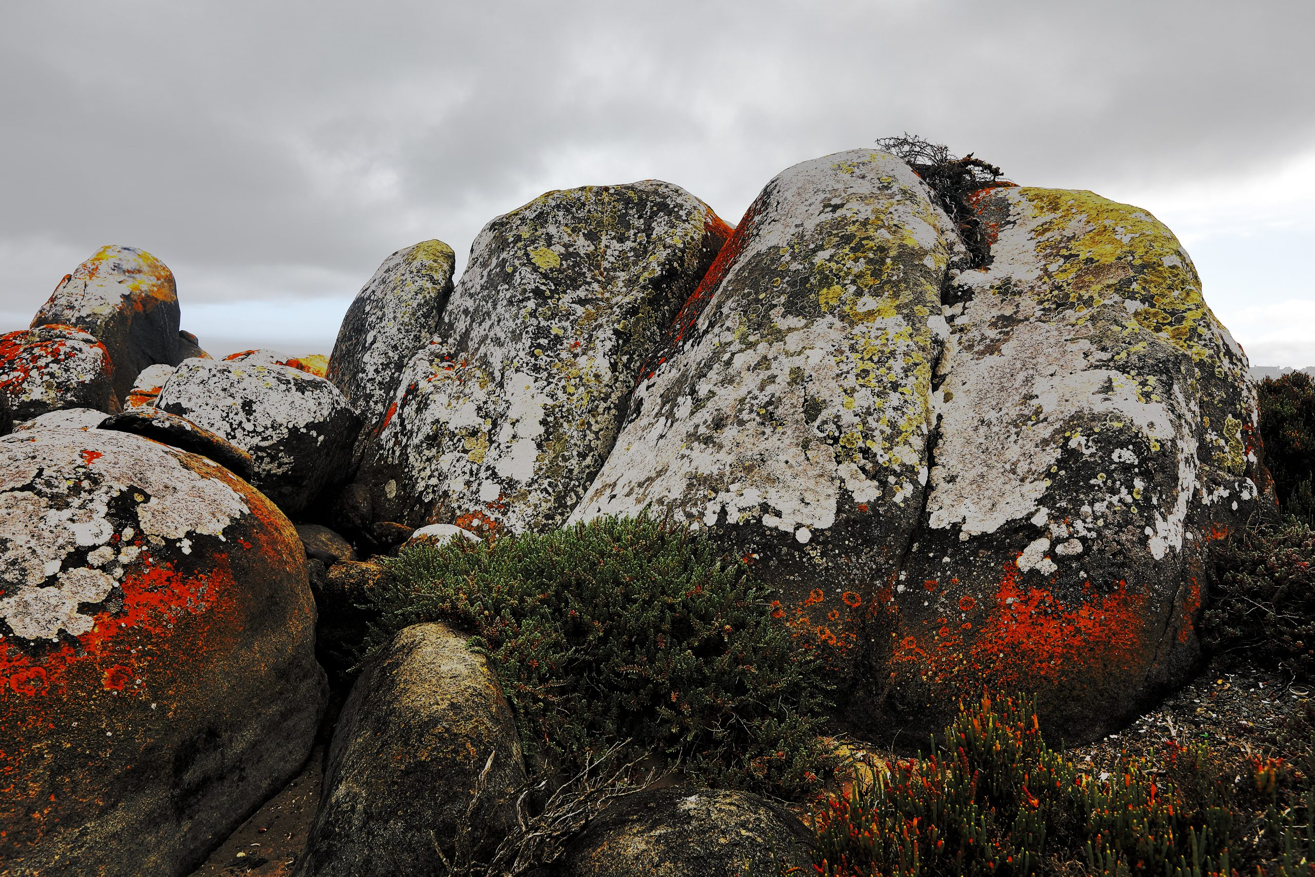 Granite boulders covered with moss